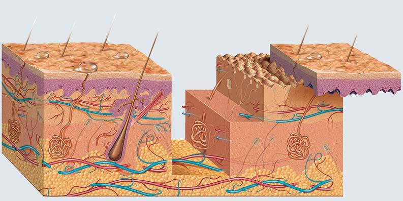 Haut – lässt giftige Grilldämpfe durch
